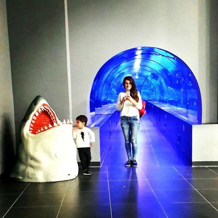 mum and son 👩👦 Photo Mum And Son Mum Love Love ♥ Fish Blue Aquarium Aqua Aquarium Life Enjoying Life people and places Shark