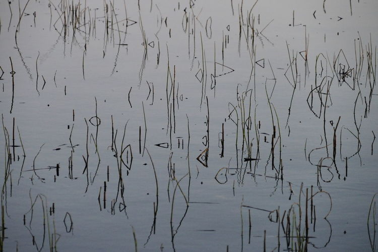 Killyfole Lake, Roslea, Co. Fermanagh Arrival Day Lake Landscape Nature No People Outdoors Water Reeds Perspectives On Nature