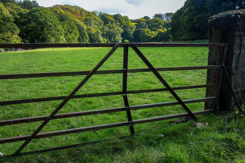 Agriculture Farm Farmland Field Gate Green Rural Rustic Trees Agricultural Cornish Cornwall Countryside England Fence Five Bar Gate Iron - Metal Landscape Metal Outdoors Remote Scenery