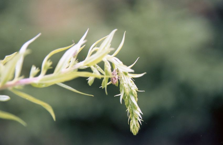 Beauty In Nature Branch Close-up Day Focus On Foreground Fragility Freshness Green Color Growth Leaf Nature No People Outdoors Plant Plant Part Plant Stem Selective Focus Sepal Tranquility Twig Vulnerability