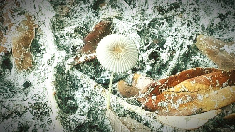 Mushroom Close-up Outdoors JacksonvilleFL