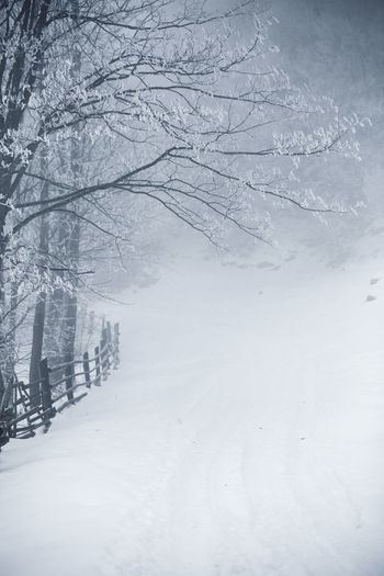 Landscape_Collection Nature Backgrounds Bare Tree Beauty In Nature Branch Cold Temperature Day Forest Freshness Frozen Garden Ice Landscape Mist Nature No People Outdoors Scenics Snow Snowing Tree Weather White Color Winter