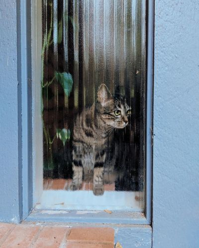 Portrait of cat seen through window