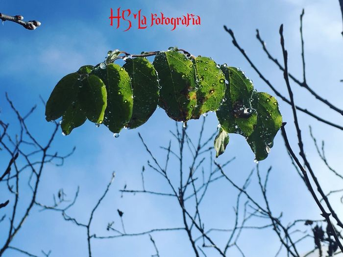 Sky Low Angle View No People Text Branch Growth Green Color Outdoors Beauty In Nature