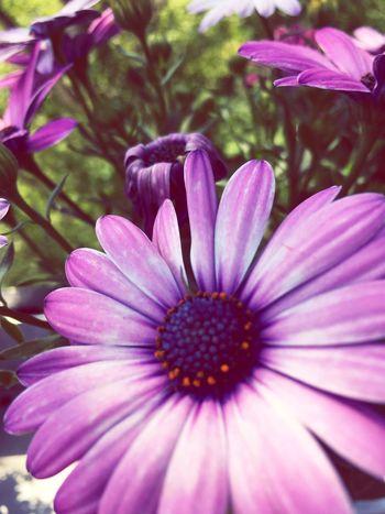 Flower Blume Nature Blumen Springtime Spring Summer Good Good Morning Feel The Journey Freedom Nice Balkon Alone Love
