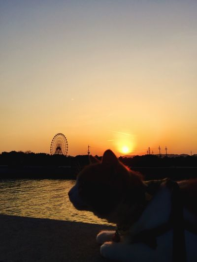 夕暮れさんぽ 夕暮れ 夕暮れどき グラデーション Sunset 散歩 Cat Enjoying Life Relaxing 観覧車 Harbor Sky