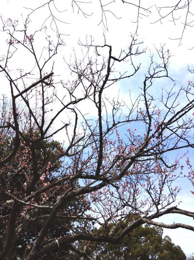 Tree Nature Beauty In Nature Sky Low Angle View No People Outdoors Sakura Blossom Cherry Blossom Cherry Blossom Tree Flower Make You Coffee