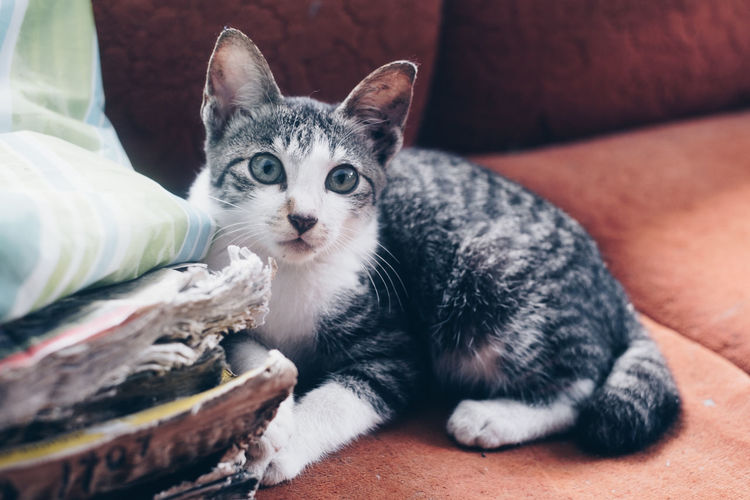 Close-up portrait of kitten relaxing