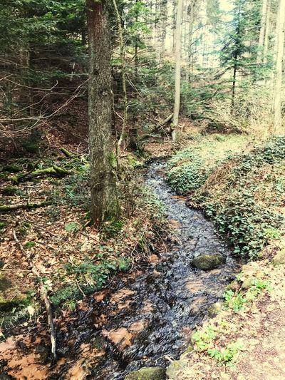 Pfälzer Wald No