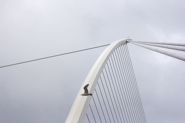 Alternative Energy Animal Architecture Bird Bridge - Man Made Structure Built Structure Connection Day Dublin Lines Low Angle View Minimal Minimalism Minimalist Minimalist Architecture Modern No People Outdoors Samuel Beckett Bridge Seagull Sky Strings Suspension Bridge Technology The Architect - 2017 EyeEm Awards