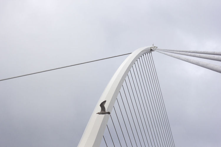 Low angle view of bird flying by suspension bridge against sky