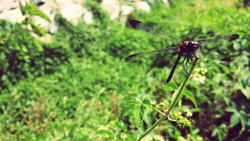 Nature Plant Life EyeEm Best Edits Photography Small_world Dragonfly Nature_collection Plants Trees Planting