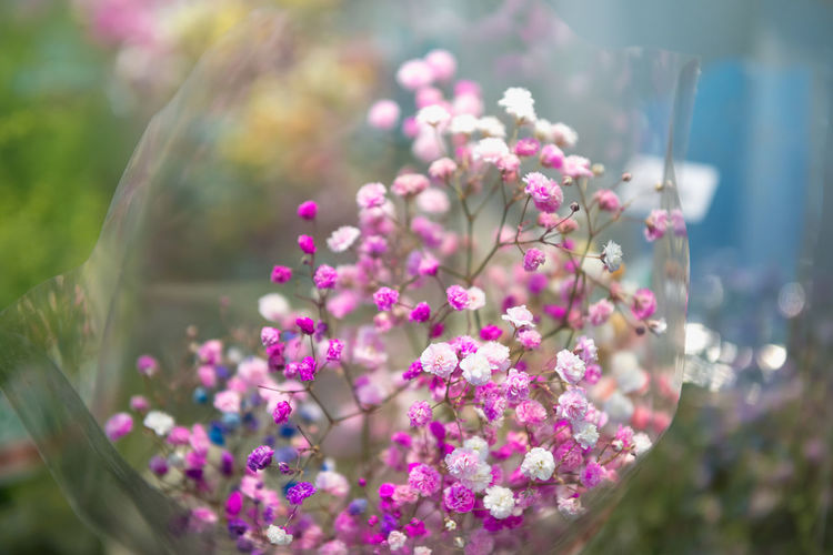 Flowering Plant Flower Plant Vulnerability  Fragility Beauty In Nature Freshness Selective Focus Close-up Pink Color Growth Nature Day No People Focus On Foreground Petal Outdoors Flower Head Inflorescence Sunlight