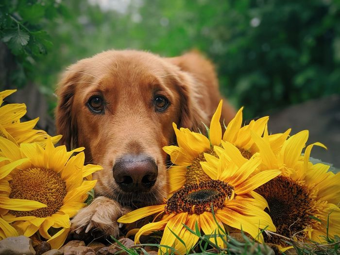 Close-up of a dog on yellow flower