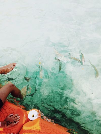 The Week on EyeEm Editor's Picks Island Beauty In Nature Blue Simplicity IPhoneography VSCO Cam Tranquility Travel Destinations Lifestyles Fish Relaxing Swimming Vacations Outdoors Sea Day Leisure Activity Water High Angle View Barefoot Summer Exploratorium