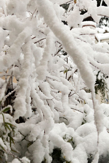 Invierno_Nieve Shades Of Winter Beauty In Nature Close-up Cold Temperature Day Freshness Frozen Growth Inviernografias Nature No People Outdoors Plant Snow Weather White Color Winter