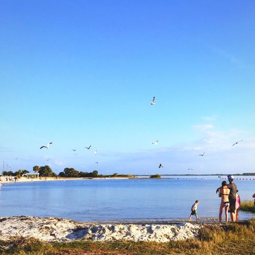 Family Watching Seagulls Flying At Lakeshore Against Blue Sky