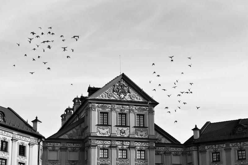 Architecture Bird Flying Building Exterior Animal Themes Built Structure Flock Of Birds Animals In The Wild Wildlife Low Angle View Place Of Worship Mid-air Spirituality Religion Spread Wings Medium Group Of Animals Sky Pigeon Avian Cloud - Sky Historic Indoors  Dark Day Outdoors