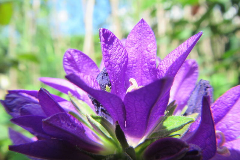 Crocus flower Beauty In Nature Blooming Close-up Flower Flower Head Fragility Freshness Growth Leaf Macro Macro Photography Nature Outdoors Petal Plant Purple EyeEmNewHere Violet Alpine Flower Alpine Violet Crocus Spring The Great Outdoors - 2017 EyeEm Awards BYOPaper! EyeEm Selects Neon Life The Week On EyeEm Perspectives On Nature Visual Creativity Summer Exploratorium