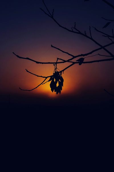 There will be Light Sunset Orange Color Silhouette Nature Sky No People Outdoors Beauty In Nature Low Angle View Animal Themes Day Hello World EyeEmBestPics Eye4photography  EyeEmNewHere Eyeemphotography Best EyeEm Shot Sunlight Sun Branch Silhouette Sunrise Sunrise_sunsets_aroundworld