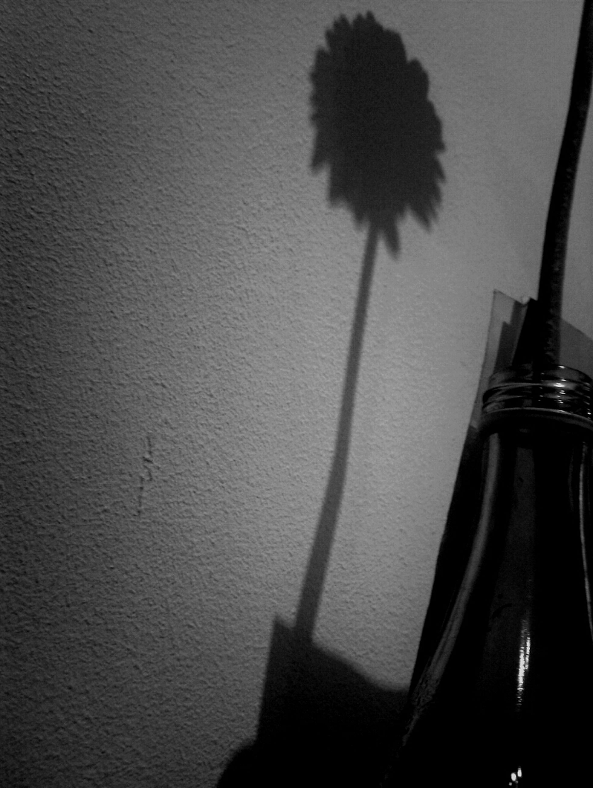indoors, close-up, still life, table, home interior, no people, vase, flower, wall - building feature, shadow, focus on foreground, potted plant, day, simplicity, glass - material, chair, built structure, sunlight, window, plant