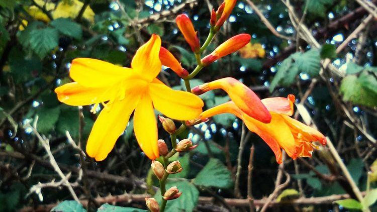 Vibrant Nature Walk Colours Flower On The Road Sunshine