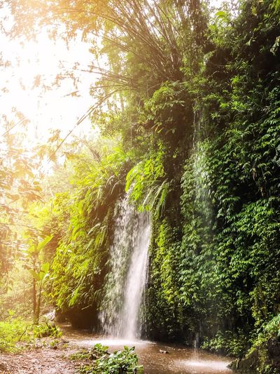 Jungle Holiday Travel Photography Waterfall Baliphotography Bali, Indonesia Bali Tree Plant Motion Nature Water Beauty In Nature No People Sunlight Day Forest Scenics - Nature Growth Green Color Waterfall Long Exposure Outdoors Splashing Land Spraying Flowing Water