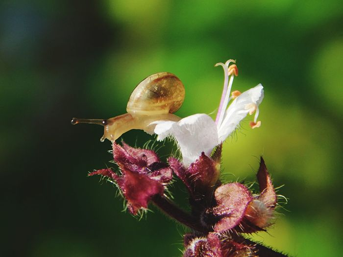 baby snail on