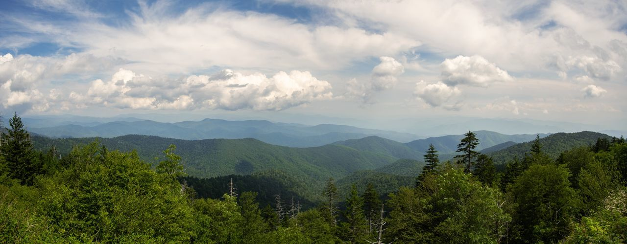 Panoramic view from end of Clingmans Dome road Great Smoky Mountains  Clingmans Dome Panoramic Eyeforphotography Photoshop Clouds And Sky Cloudy Tree Mountain Forest Mountain Peak Beauty