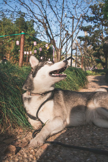 Dog relaxing in a park