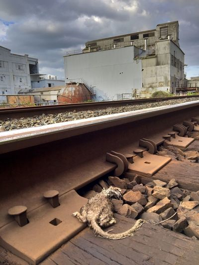 EyeEm Exploring Sky Architecture Built Structure Building Exterior Outdoors Landscape Abandonded Building Damaged Factory Dead Rat Traintracks Metal Rusty Run-down Industry Old Mill  Abandoned Backgrounds Scenics Cloud - Sky Abandoned Places Railroad Track Water Tower - Storage Tank Silo