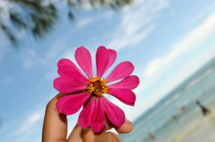 Latepost Vacation Throwback Sea Flower Micro feel the flower power ?