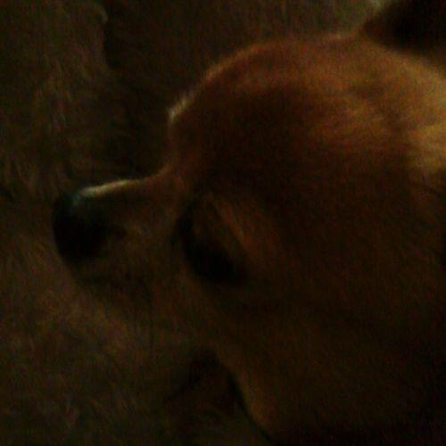 I Love My Dog First Eyeem Photo