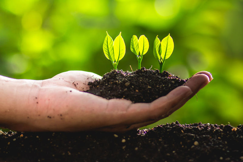 Cropped hand of person planting saplings in soil