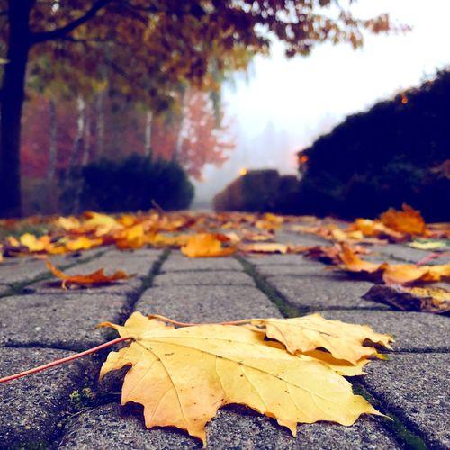 The Path of Autumn Autumn colors Autumn Leafs Change Autumn Leaf Plant Part Nature Plant Day No People Tree Falling Close-up Road Outdoors Orange Color
