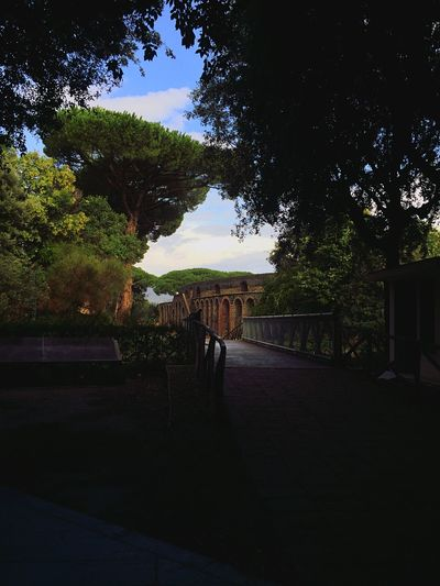 Pompei🏟 Amphitheatre History Romanhistory Gladiator Arena Italy Southitaly Streetphotograph Trees Amazing Nature