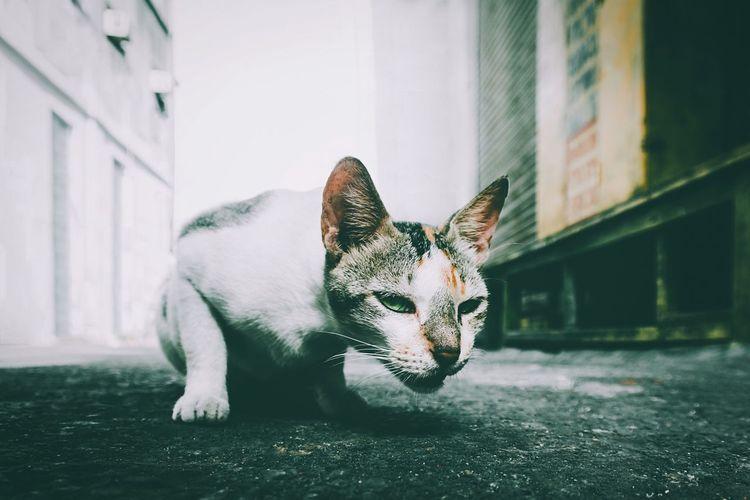 Cat Mumbai Street Urban The Week On EyeEm The Street Photographer -2016 EyeEm Awards Nature's Diversities
