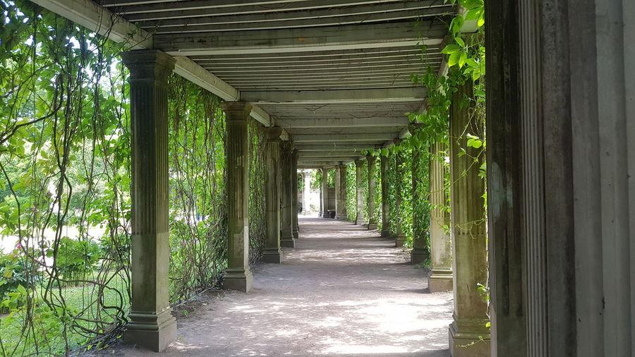 Empty walkway along trees