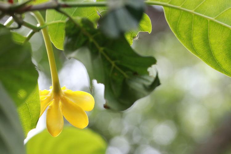 Close up yellow