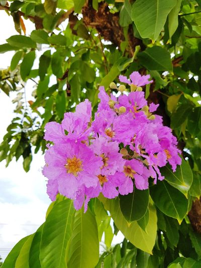 Low angle view of purple flowers blooming on tree