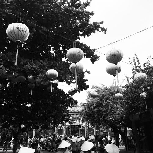 Connected By Travel Tree Trees Lantern Lanterns Vietnam Vietnamese Vietnamphotography Travel Destination