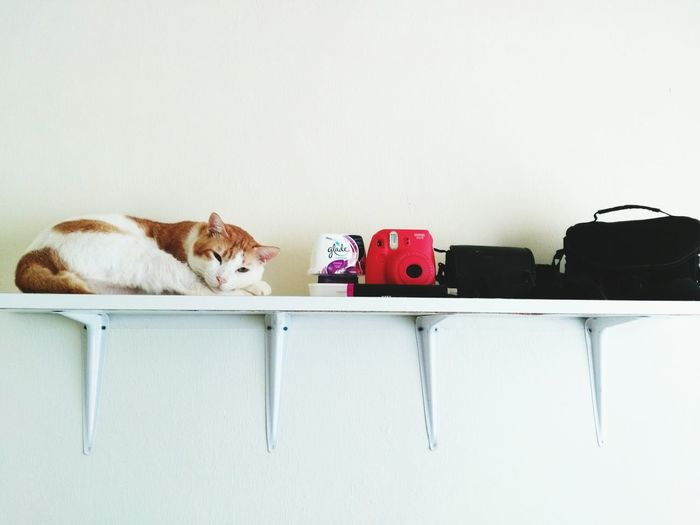 Sleeping Cat Domestic Cat Animal Themes Indoors  Domestic Animals Cat Photography Cats Of EyeEm Catofmylife My Cat Cats 🐱 Catlovers Pet Lover Pets Of Eyeem Animal Photography Catsoftheworld Animallovers Animalphotography