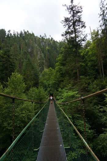 Architecture Beauty In Nature Bridge Bridge - Man Made Structure Built Structure Connection Day Diminishing Perspective Direction Footbridge Forest Land Nature No People Outdoors Plant Railing Rope Bridge Scenics - Nature Sky Slovenský Raj The Way Forward Tranquil Scene Tranquility Tree