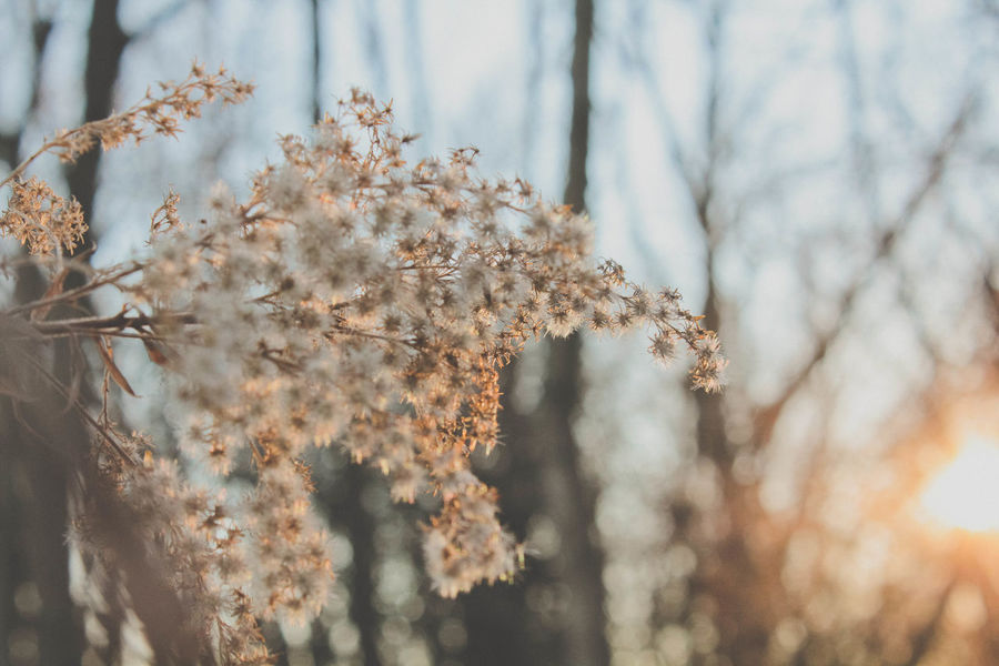 Beauty In Nature Blossom Botany Branch Close-up Day Dried Plant Film Like Focus On Foreground Fragility Golden Hour Growth Matte Nature No People Outdoors Reaching Selective Focus 43 Golden Moments Sunlight Tranquility Tree Twig Weather Showcase June