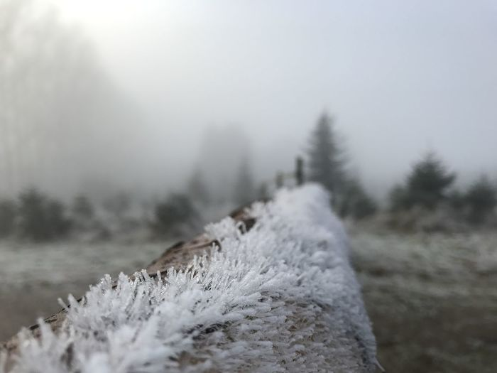Close-Up Of Frozen Plants On Land