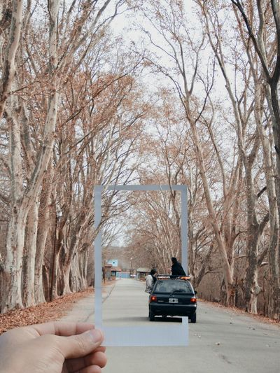 Bare trees on road