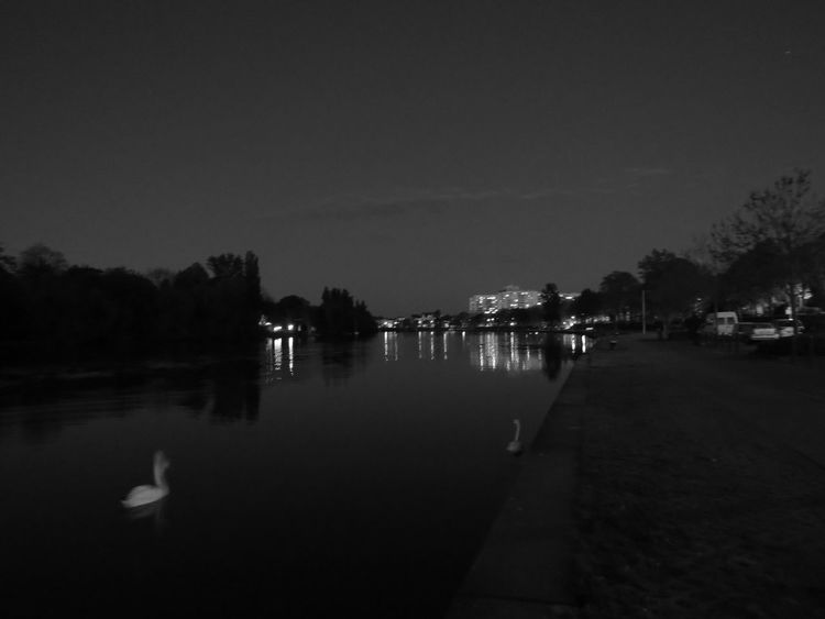 Calm Dark Distant Evening Atmosphere Main Night Lights Nightphotography Offenbach Am Main Park Relaxing Moments River Riverbank Scenics Standing Water Swan Tranquil Scene Tranquility Water Water Reflections Waterfront