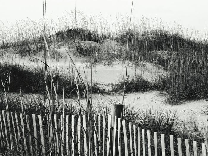 Backgrounds Full Frame No People Day Outdoors Close-up USA Wrightsvillebeach Wrightsville Beach Wrightsvillebeachnc Wrightsville Beach NC Northcarolina North Carolina Beauty In Nature Scenics Travel Destinations Beach Beach Photography Beach Day Beachporn Sand Dune Sandy Beach