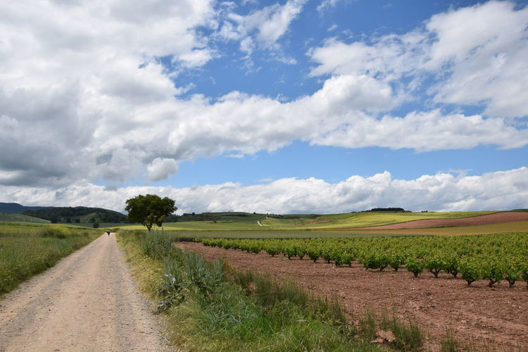 Landscape Environment Sky Cloud - Sky Road Rural Scene Land Field Plant Agriculture Scenics - Nature Tranquil Scene Direction Nature Beauty In Nature The Way Forward Tranquility Dirt Day No People Diminishing Perspective Farm Outdoors Long CaminodeSantiago