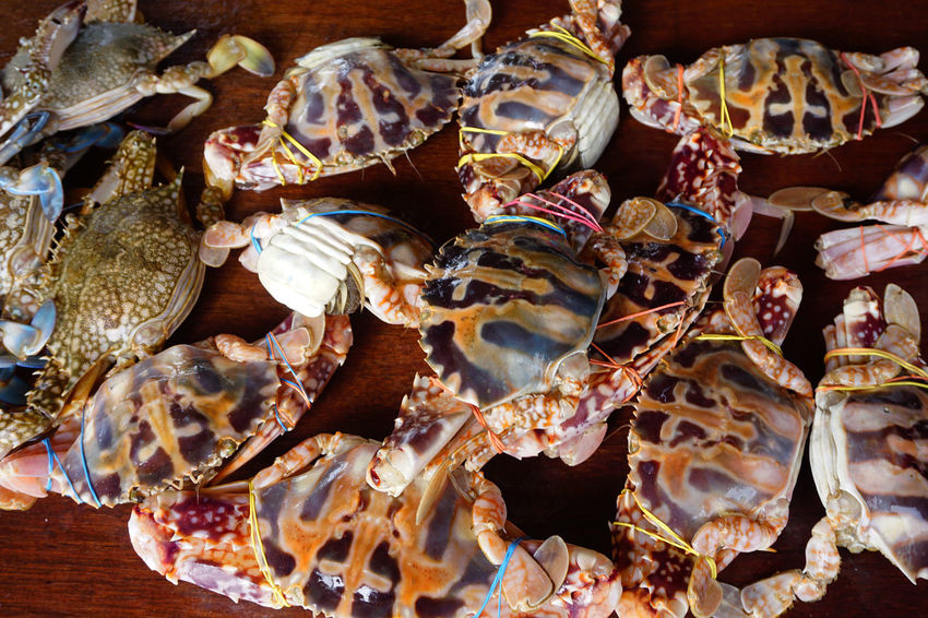 Crabs #broadsheet #closeupshot #crab #flat Shell #Legs #macro #mar #omnivoro #scavenger #White Close-up Day Food Food And Drink Freshness Indoors  No People Seafood EyeEmNewHere EyeEm Selects
